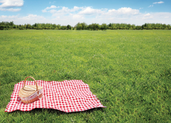 picnic-basket-blanket-pasture-field
